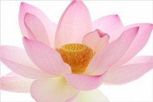 zwangerschapsyoga-lotus